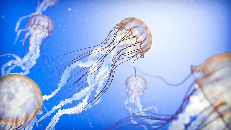 Creating a Jellyfish