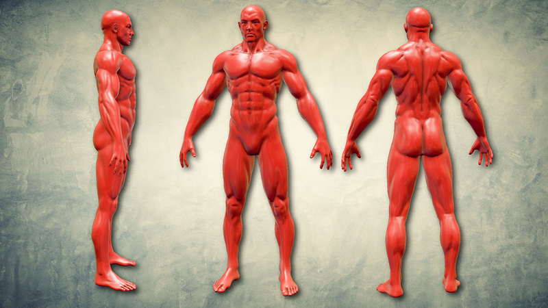 Sculpt the Human Body