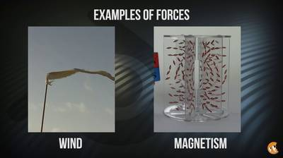 Force Field Basics