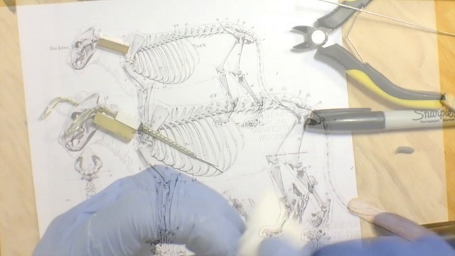 Creating a Detachable Wire Armature