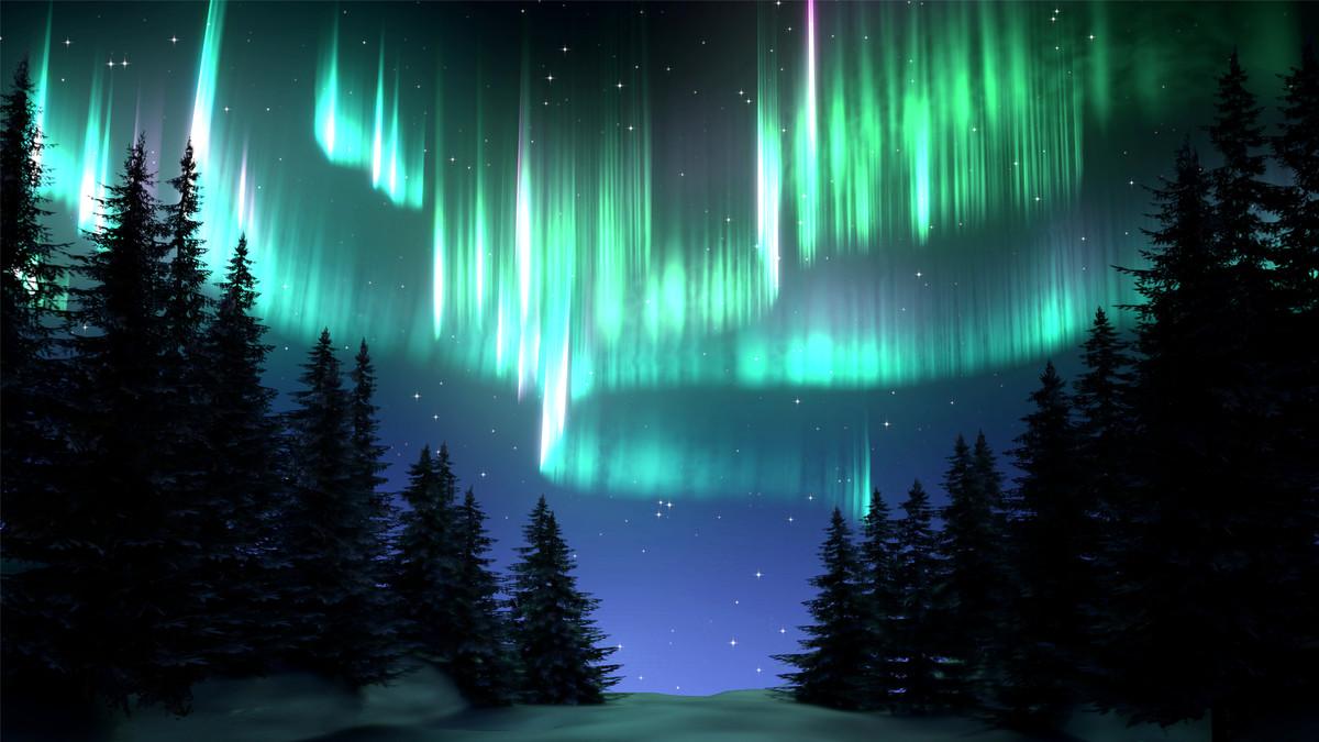 Aurora Borealis Forest