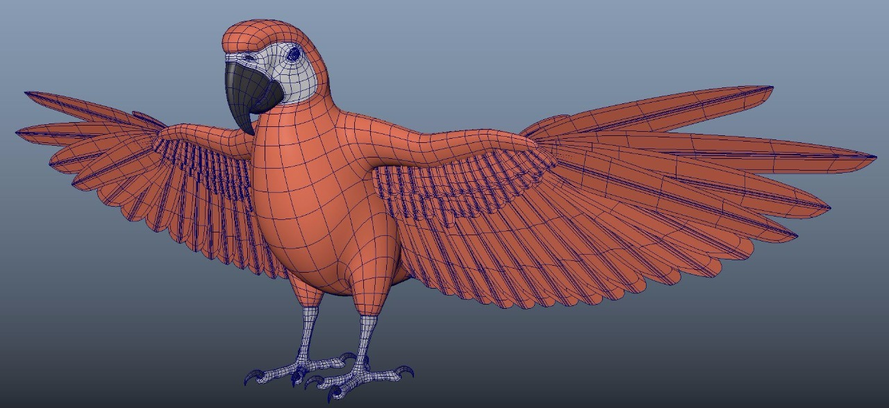 Macaw 3D