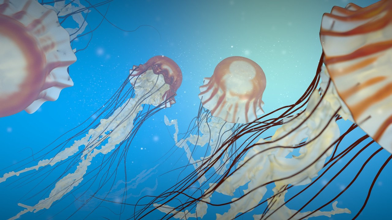 Jellyfish Course