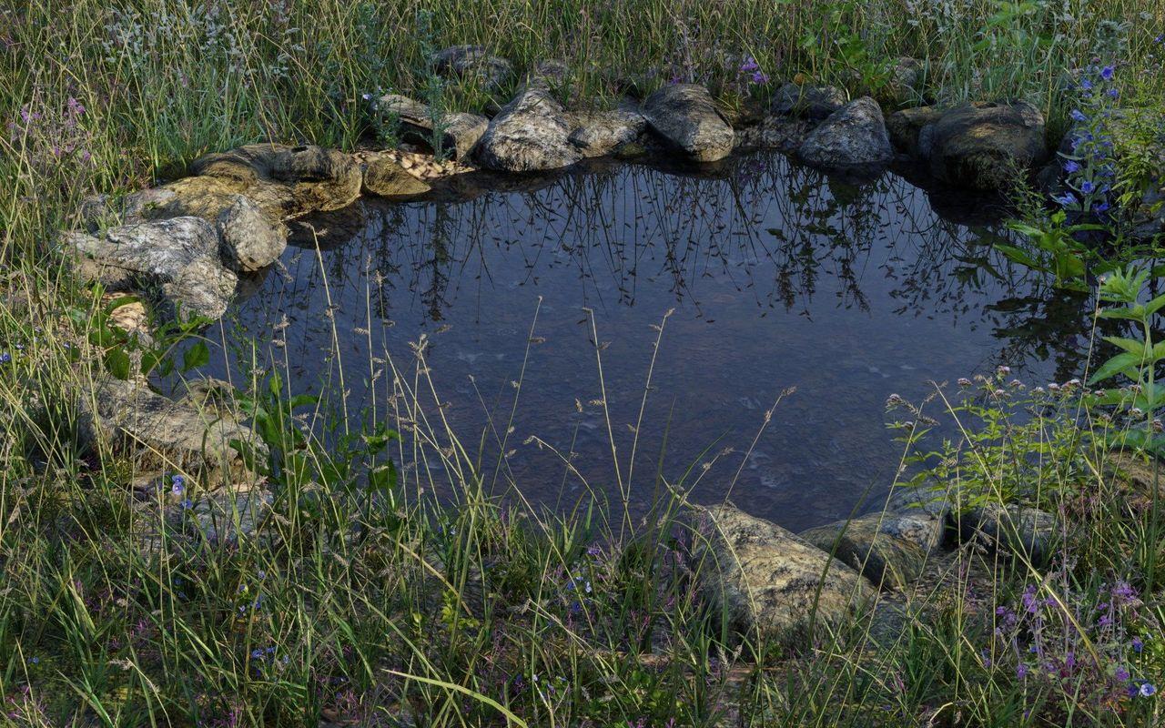 An overgrown pond