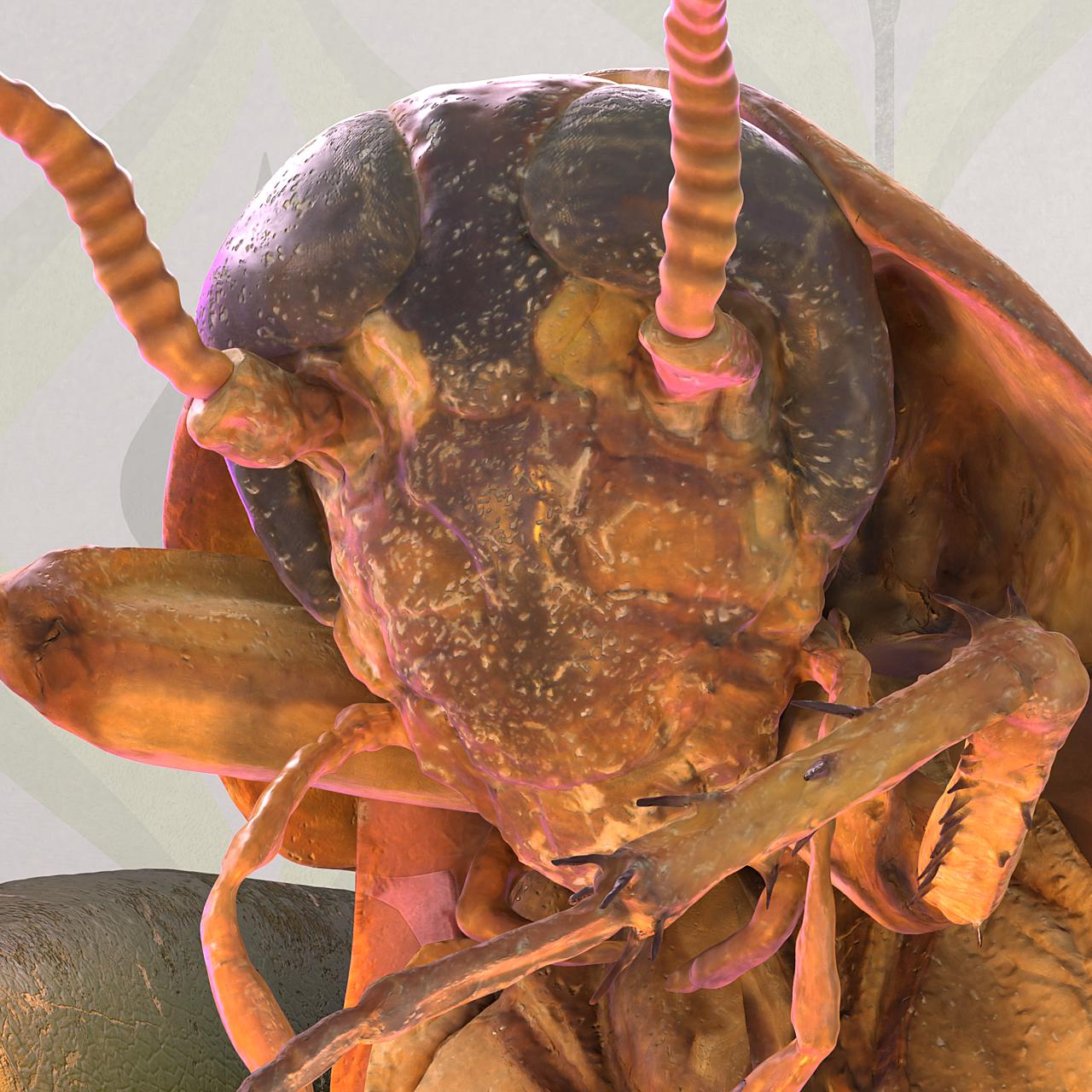 Playroach