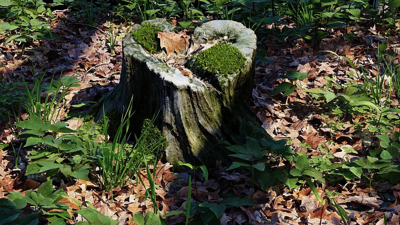 Tree Stump Colection