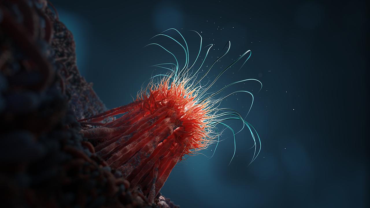 Urchin Virus 02