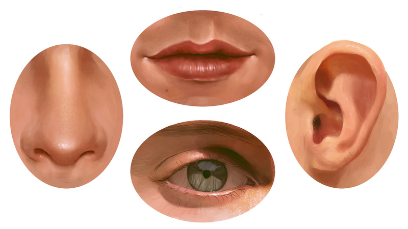 Facial Features Reference